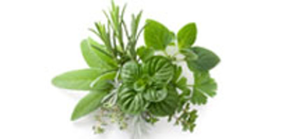 4 Commonly Used Healing Herbs