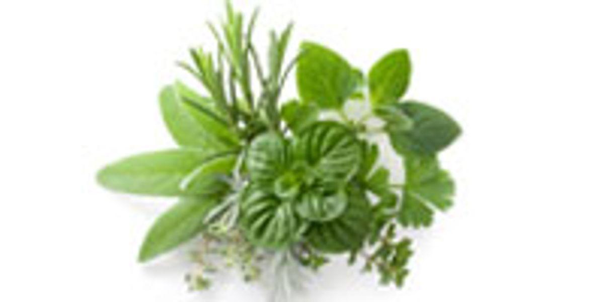 gyógynövények fogyásig dr oz
