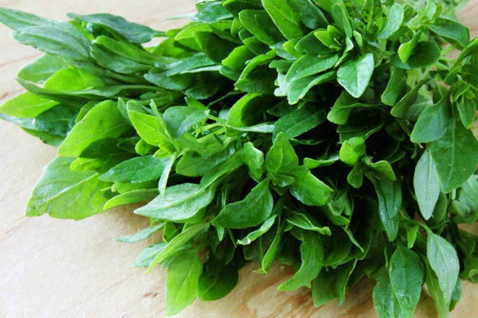 Pegan 365 Basil Tahini Salad Dressing