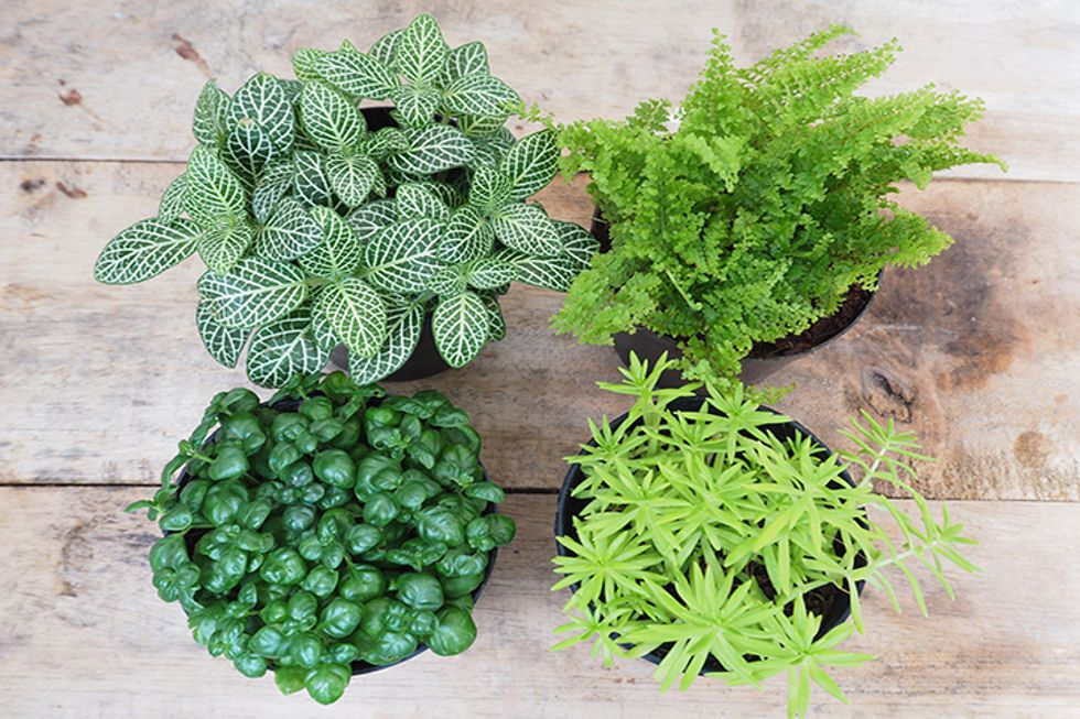 Houseplants and Your Health: What You Need to Know