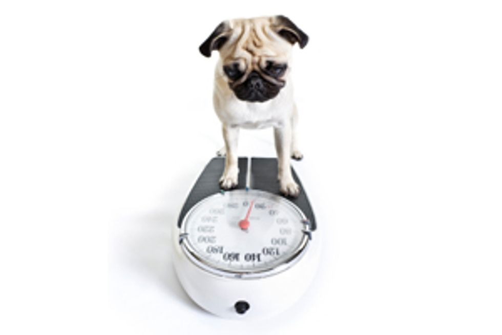 PEDIGREE® Brand Presents: Weight Guidelines for Dogs