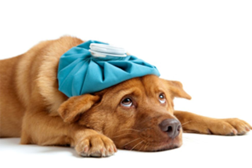 PEDIGREE® Brand Presents: Pet First Aid