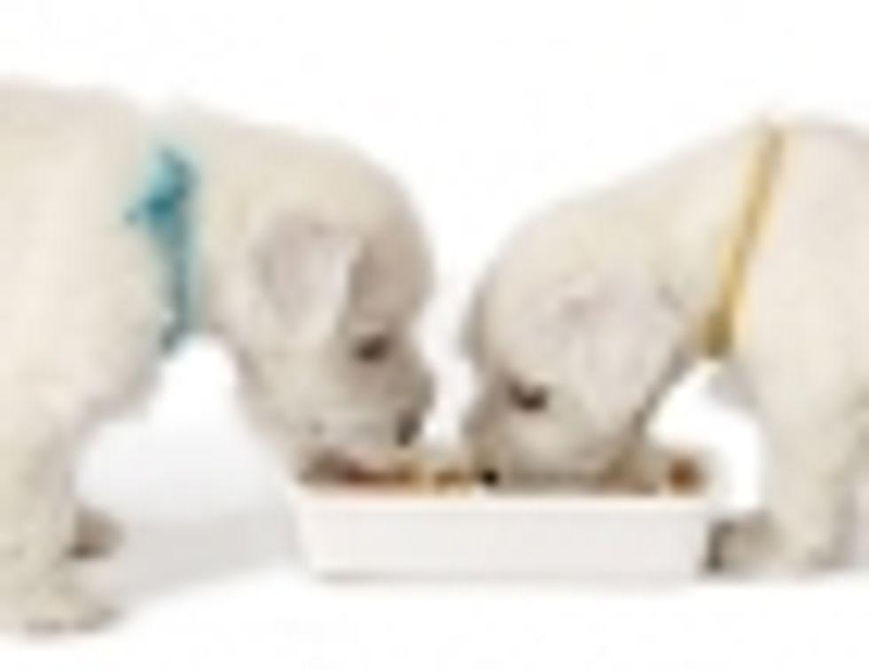 PEDIGREE® Brand Presents: Foods Your Dog Shouldn't Eat