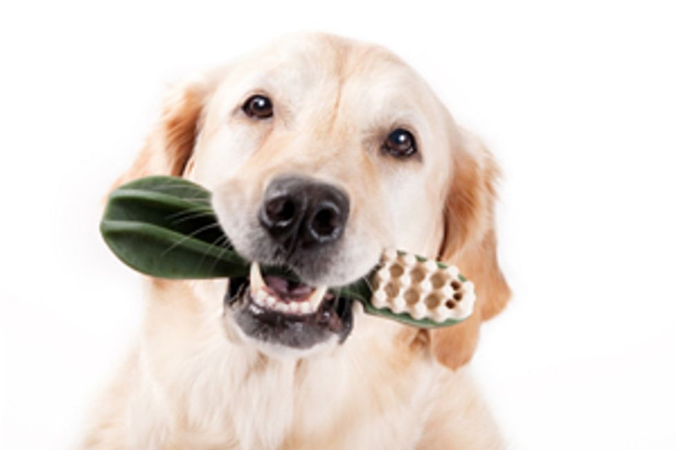 PEDIGREE® Brand Presents: Tips on Keeping Your Dog's Teeth Clean