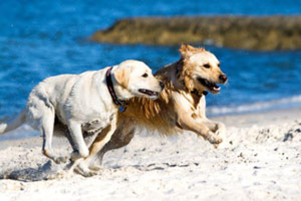 PEDIGREE® Brand Presents: Help Your Dog Survive the Dog Days