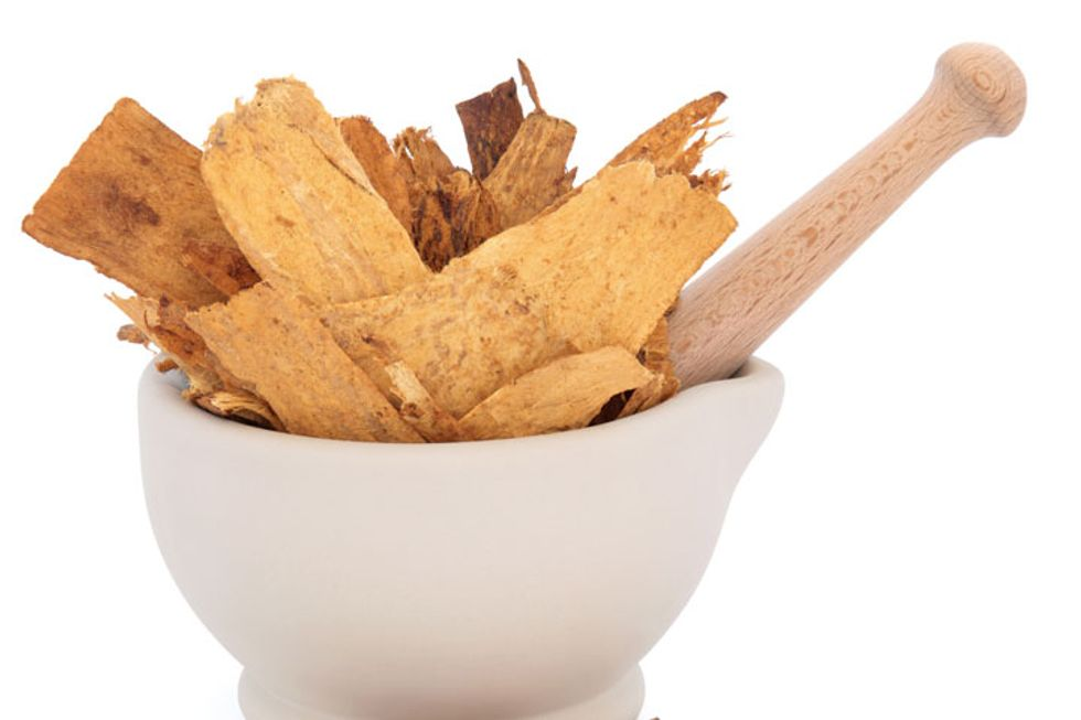 Astragalus Root: Is This Right for You?