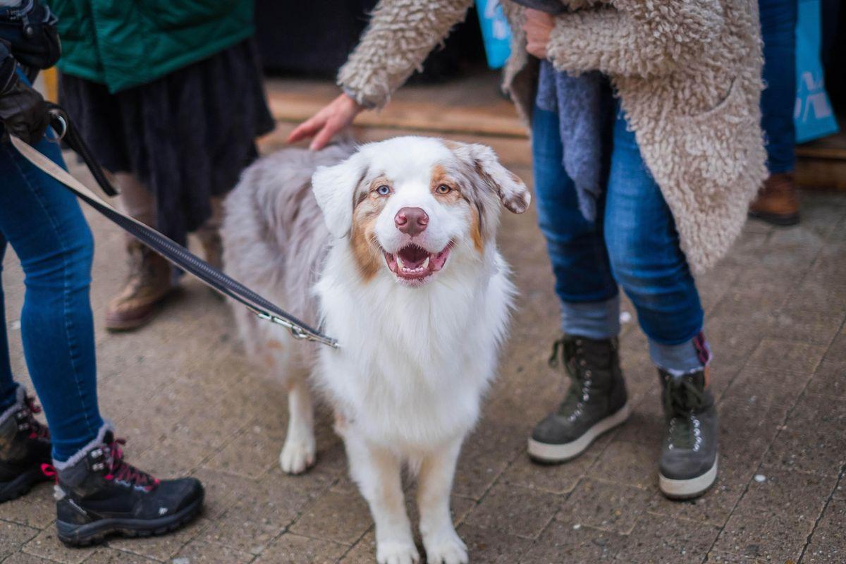 5 Warning Signs a Dog May Bite You