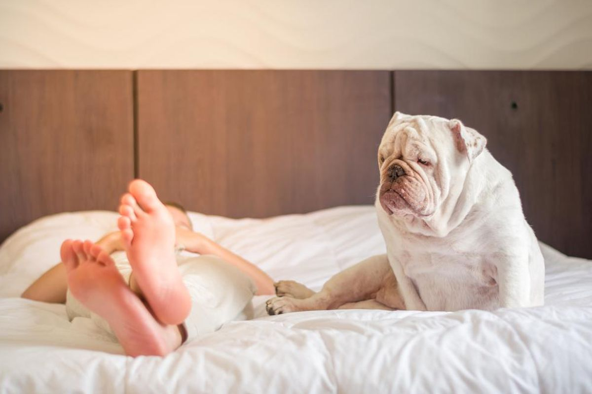 Cesar Millan's #1 Rule When You're Dog Is Hogging the Bed