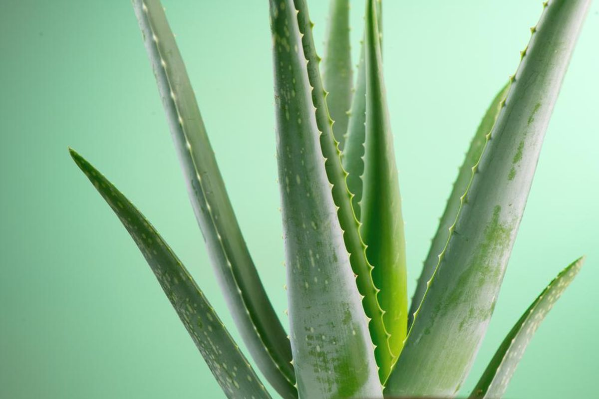 5 Benefits of Using Aloe Vera You Should Know About