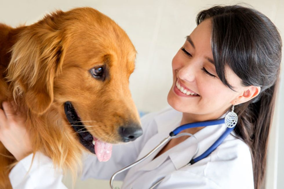 The 4 Universal Health Needs of Dogs