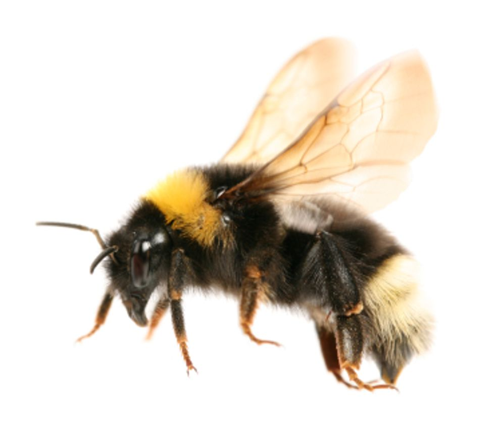 The Buzz About Bee Skincare Products