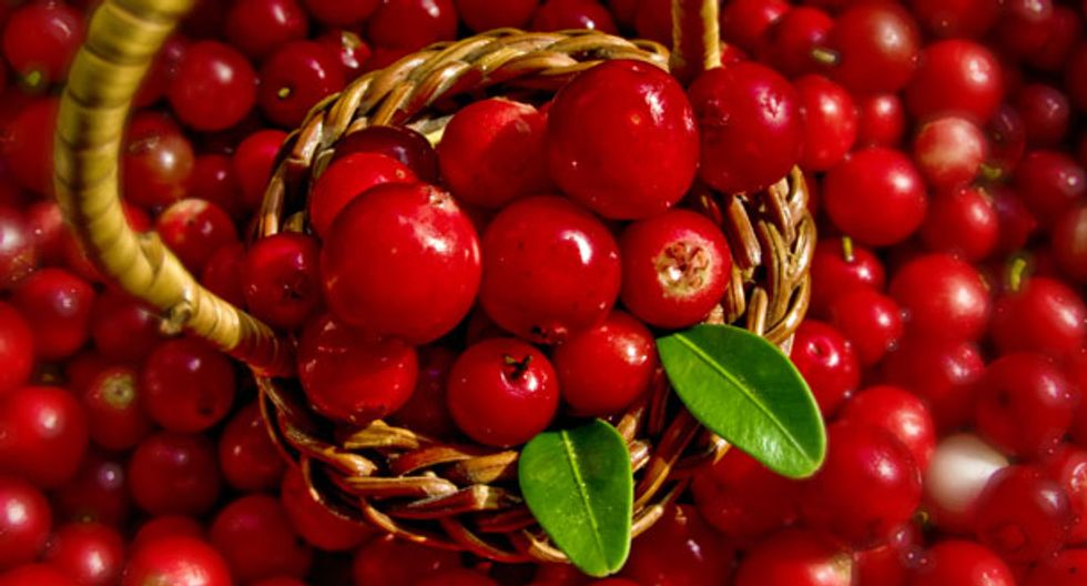 The New Superfruit: Lingonberry