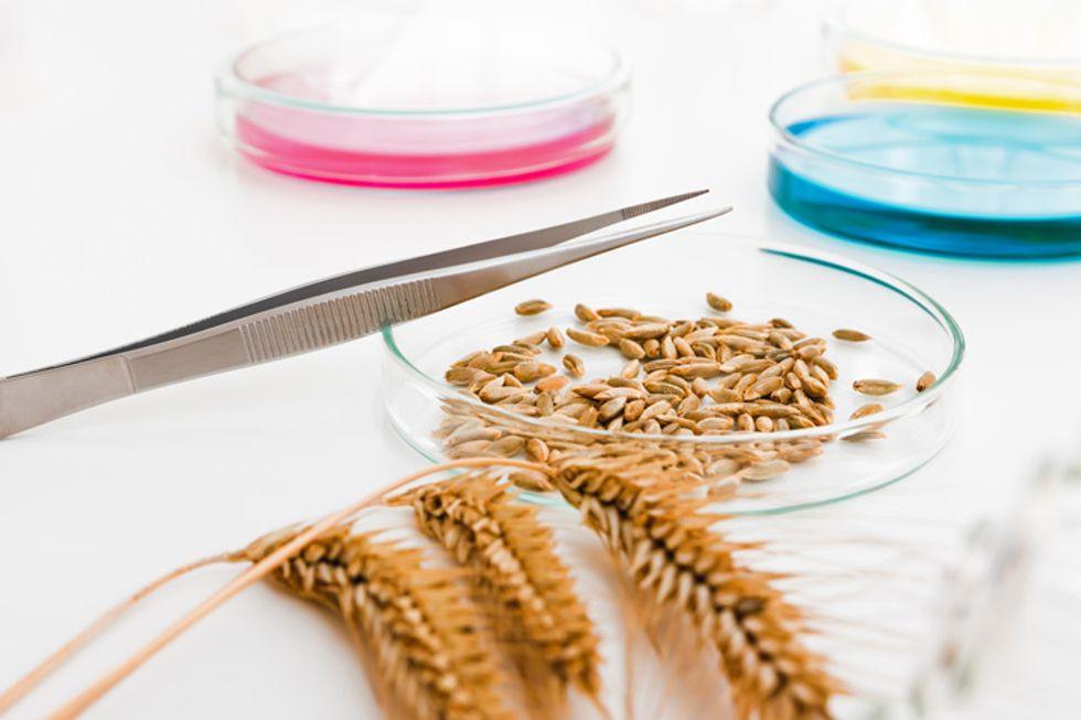 Understanding Genetically Modified Foods